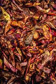 Autumn leaves pattern — Stock Photo