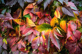 Autumn burnt leaves — Stock Photo