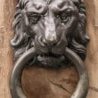 Lion door knock — Stock Photo
