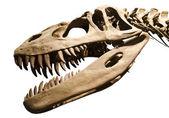 Dinosaur skeleton over white isolated background — Stock Photo