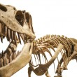 Tyrannosaurus skeleton over white isolated background — Stock Photo #15742091