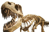 Tyrannosaurus skeleton over white isolated background — Stock Photo