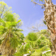 Palm tree in Botanic garden, Madrid, Spain — Stock Photo