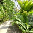 Tropical Plants in a greenhouse at botanic garden, Madrid, Spain. — Stock Photo #24592917