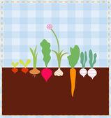 野菜のベッド — ストックベクタ