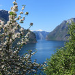 Flowering tree by the fjord. — Stock Photo #13176008