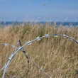 Stock Photo: Barbed in Normandie