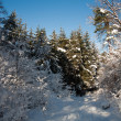 Stock Photo: Winter in forest!
