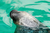 Seal in wather — Stockfoto