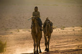 Boy riding camels — Stock Photo