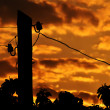 Electric column at sunrise — Stock Photo