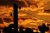 Electric column at sunrise — Stock Photo