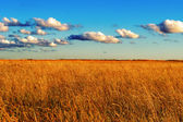 Field of wild grass at sunset — Stock Photo