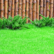 A green lawn — Stock Photo