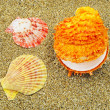 Stock Photo: Three colorful seashells