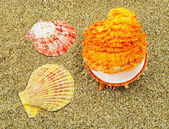 Three colorful seashells — Stock Photo