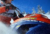 Hawk di neve e neve farinosa — Foto Stock
