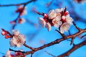 Die Geburt des Frühlings — Stockfoto