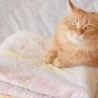 Cat with towels — Stock Photo