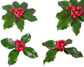 Holly Berry. Higher resolution available for individual images in my portfolio. — Stock Photo