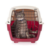 Cat closed inside pet carrier isolated on white background — Stock Photo
