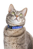 Portrait of a tabby cat against white background — Stock Photo