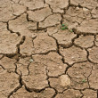 Dried and cracked earth - global warming danger — Stock Photo