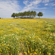 Spring landscape in Alentejo, Portugal. — Stock Photo