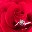 Engagement ring on a red rose — Stock Photo #13298749