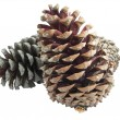Pine cones isolated over white — Stock Photo