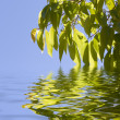 Leaves touching and reflecting in water — Stock Photo