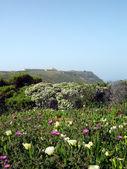 Espichel Cape landscape — 图库照片