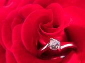 Pierścionek zaręczynowy na czerwona róża — Zdjęcie stockowe