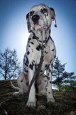 思维的狗 — 图库照片