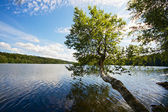 Boom groeien boven lake — Stockfoto