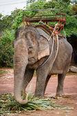 Giro in elefante — Foto Stock