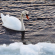 Stockfoto: Swimming in winter