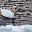 Foto de Stock  : Swimming in winter