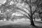 Glowing Tree — Stock Photo