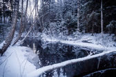 Reflections with fallen tree on Wintry River — Stock Photo