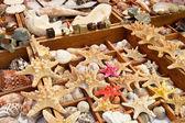 Starfish and seashells for sale — Stock Photo