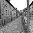 Wires and barraks in Auschwitz I — Stock Photo