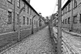 Wires and barraks in Auschwitz I — Stock Photo