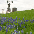 Stock Photo: Texas windmill on hillside with bluebonnets
