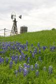 Moulin à vent au texas sur les collines avec bluebonnets — Photo