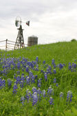 Texas windmill on hillside with bluebonnets — Stok fotoğraf