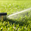Stock Photo: Underground sprinkler head spraying in morning sunlight