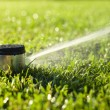 Underground sprinkler head spraying in morning sunlight — Stock Photo #21008831