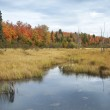 Marsh and trees with autumn color in northern Minnesota — Stock Photo #21009201
