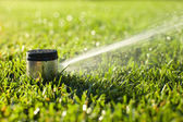 Underground sprinkler head spraying in the morning sunlight — Stock Photo